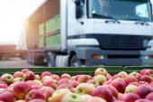 Türkiye'nin Yaş Meyve ve Sebze İhracatı Artıyor